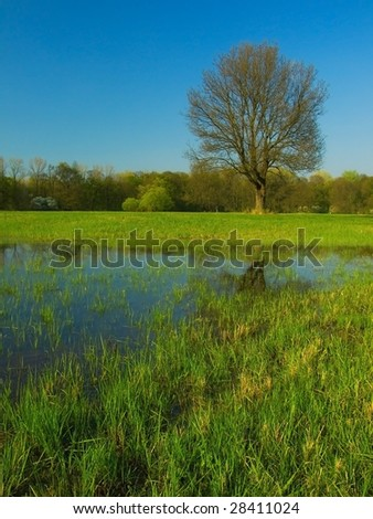 Small pond in the meadow