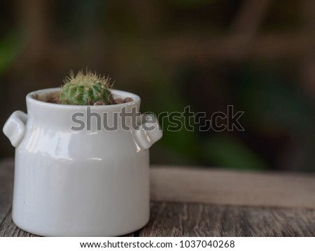 Small pot in the pot. #1037040268