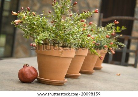 small potted plants sitting on a patio table, persimmon in foreground