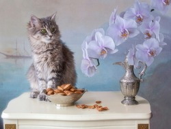Small pretty kitty and branch of orchid