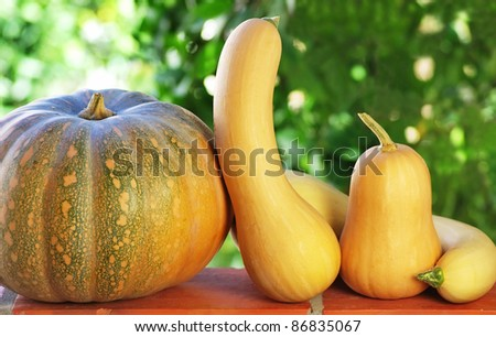 Small pumpkins in green background.