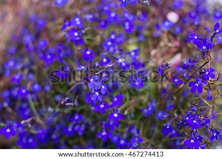 Small Purple Flowers Background EZ Canvas