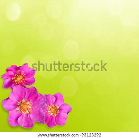 Small purple flowers on sunny background