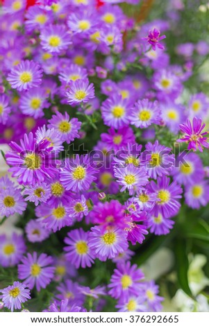 Free photos small purple flowers with yellow stamens avopix small purple flowers with yellow stamens 376292665 mightylinksfo