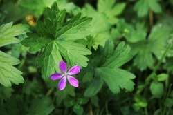 Small purple forest flower on blurred green background