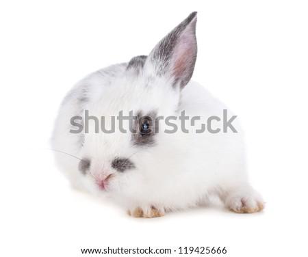 Small rabbit. Isolated on white background - stock photo