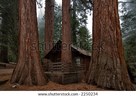 Small ranger's house in Sequoia Park