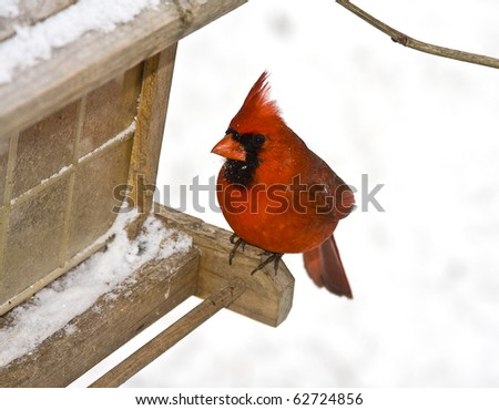 Small red cardinal sitting on bird feeder following a snowstorm
