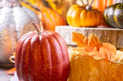 Small red pumpkin next to hay covered with leaves, orange pumpkins, orange squash, and a green squash on wood next to a silver pumpkin with a golden background