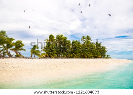 Small remote tropical island (motu) overgrown with palms in azure turquoise blue lagoon. Yellow sandy beach, flock of birds flying above. Funafuti atoll Conservation Area, Tuvalu, Polynesia, Oceania