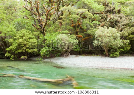 Small river in virgin rainforest wilderness of Fiordland National Park, South Island, New Zealand