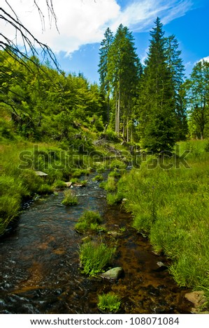 small river through green forest