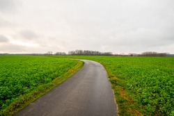 Small road in the middle of the green fields turning left in the Flemish Ardennes.
