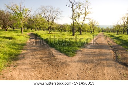 Small road to the park, forking divergently. #191458013