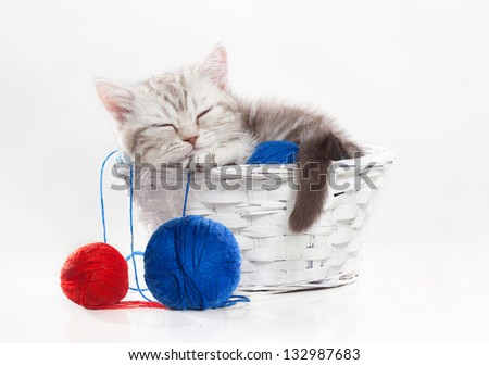 Small scottish kitten sleeps in a basket with yarn
