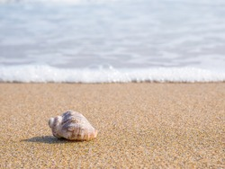 Small seashell on the beach in the sand with the water of the sea in the background.
