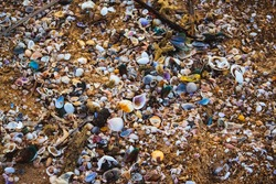 Small shells and garbage pollution on the beach near Chennai. View of beach covered with different sea shells. Selective focus. Many small shells close-up lying on the beach on a summer day