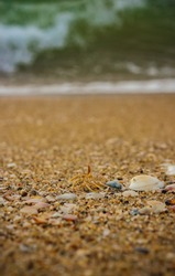 Small Shells On The Beach Sand . View of beach covered with different sea shells. Selective focus. Many small shells close-up lying on the beach on a summer day