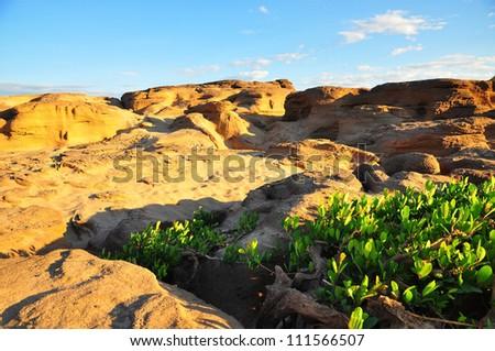 small shrub plants in stone hill