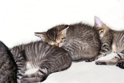 small sleeping kittens