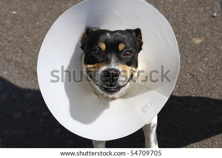 Small smiling dog wearing a cone after surgery - stock photo