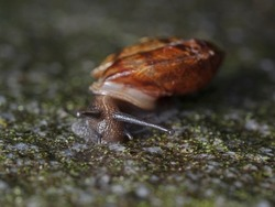 Small snail on a moss-covered, wet stone slab