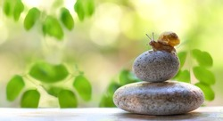 small snail on stone. Spa and relax idea. green summer background. concept of calm, relaxation, slow life, lazy. copy spase.