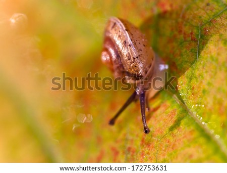Small snail on the autumn leaves