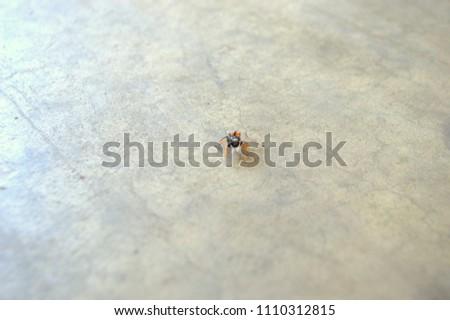 small spider on concrete floor #1110312815