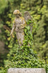 Small stone statue of an stone angel overgrown with ivy on a graveyard in Ireland. Blurry background.