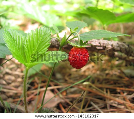 Small strawberry #143102017