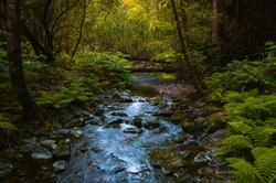 Small stream in Muir Woods
