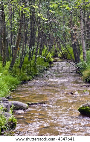 Small stream meanders through lush foliage and trees in Anchorage, Alaska