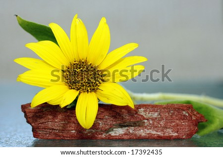 small sunflower with room for copy
