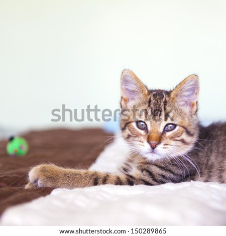 small tabby cat in bedroom stock photo 150289865 shutterstock. Black Bedroom Furniture Sets. Home Design Ideas