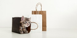 Small tabby kitten is hiding in paper bag. Cat look up in delivery bag. Shopping sale purchase concept. Long web banner with copy space on white background.