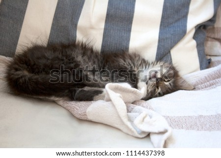 Small tabby kitty sleeping on a chair during summer day - Shutterstock ID 1114437398