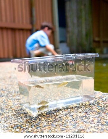 Small tank with little fish caught by a little boy with a net.