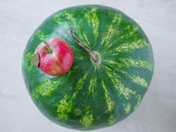 Small tiny red apple with a leaf on the top of a big watermelon. Synonyms concept.