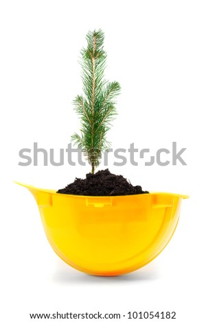 Small tree growing in a yellow hard hat.
