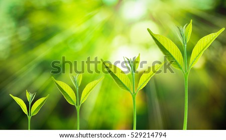 Small tree growing on the blurred fresh green nature background with bokeh of sunlight, Growth of business concepts.