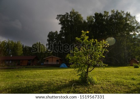 Small tree growing on the green meadow, touristic cottages, touristic tents and little forest on the background