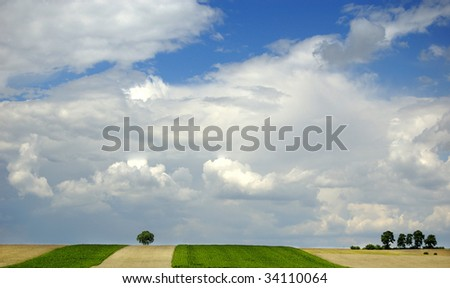 Small tree on the horizon in rural landscape with blue sky #34110064