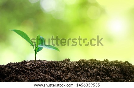 Small trees are growing in the middle of the sun, warm in the morning, the concept of saving the world and reducing global warming. ストックフォト ©