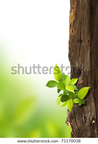 small trees growing on the old timber.