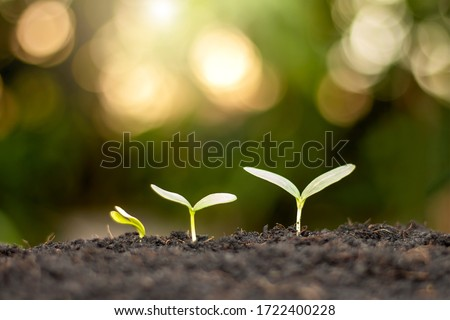 Small trees of different sizes grow on the ground, including green backgrounds, environmental and agricultural concepts. Photo stock ©