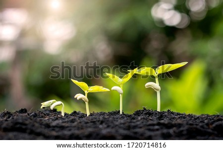 Small trees of different sizes on a green background, the concept of environmental stewardship and World Environment Day. Photo stock ©