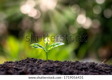 Small trees with green leaves, natural growth and sunlight, the concept of agriculture and sustainable plant growth.