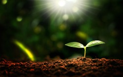 Small trees with morning sunlight, the concept of plant and plant growth