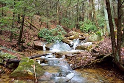 Small Trout Stream In The Forest